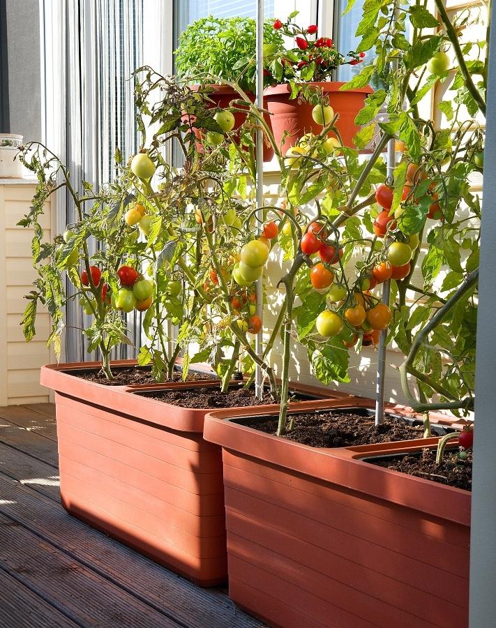 S pěstováním venku i doma vám rádi pomohou samozavlažovací nádobyBerberis.